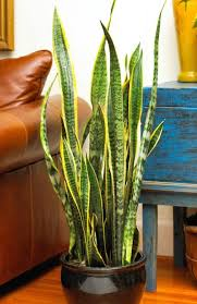 20 super easy houseplants you u0027ll love midwest living