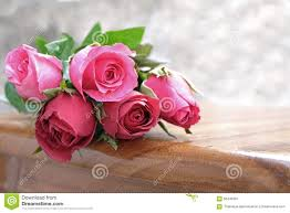 Picture Of Roses Flowers - roses flowers pink rose flower royalty free stock photo image