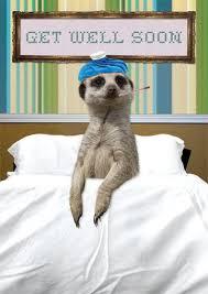 meerkat get well soon card 2 50 a great range of meerkat get
