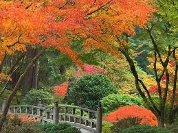 Oregon natural attractions images Photo of autumn at the portland japanese garden oregon tourist jpg
