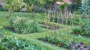 secrets to growing plump tomatoes rodale u0027s organic life