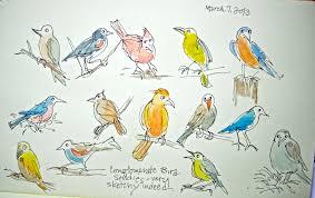 sketchbook wandering playful bird sketches
