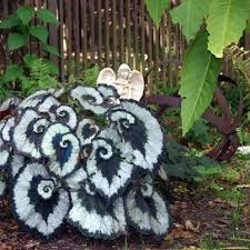 The Summer And Winter Garden - escargot begonia beautiful plant to put in your garden for the