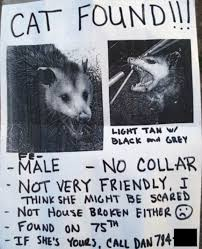 Missing Cat Meme - missing pet signs put up by owners across the world daily mail online