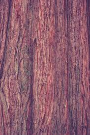 Free Laminate Flooring Free Images Nature Branch Structure Texture Leaf Trunk Log