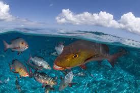 oceans ted com