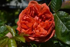 scent in the june garden the blooming garden