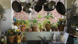apartment plants clean your apartment s stale air with houseplants apartment guide