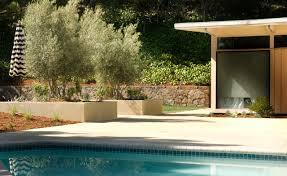 mid century modern garden rehab modern landscape san