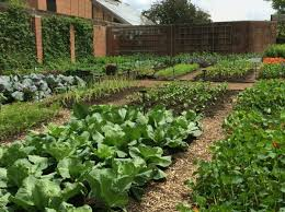 home garden an inexhaustible source of fruits and vegetables