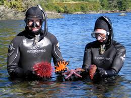 Alaska snorkeling images Ketchikan snorkel tours excursions tour ketchikan with snorkel jpg