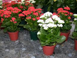 easy to care for plants for busy homeowners part 1 home