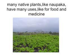 10 native plants punalu u0027u slide show of the middle field study of ninole