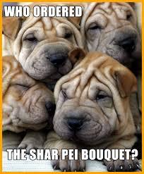 Image Flip Meme Generator - incredible meme template flip pic of cute puppy generator ideas and