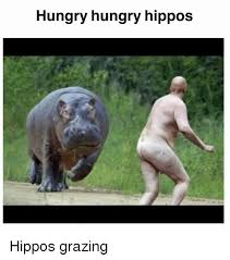 Hippo Memes - hungry hungry hippos hippos grazing hungry meme on me me