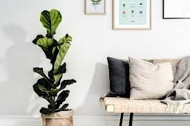 scandinavian color smoothing scandinavian decor with a light grey base in combination