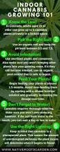 best 25 cannabis growing ideas on pinterest growing weed weed