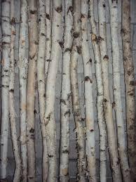 Inspirations Birch Logs