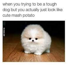 Puppy Memes - the best dat puppy memes memedroid