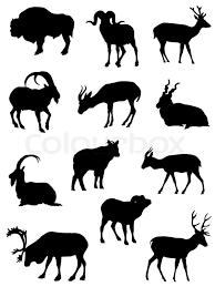 isolated illustration goat livestock mammal vector