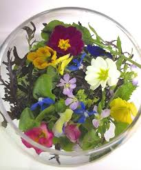 organic edible flowers 31 best edible flower salads images on edible flowers