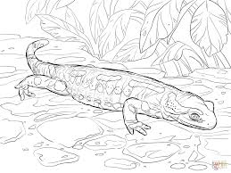 fire salamander coloring page free printable coloring pages