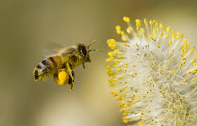 how many flowers can a bee pollinate wonderopolis