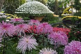New York Botanical Garden Directions Kiku The Of The Japanese Garden Press Room New York