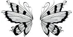 wing butterfly wing