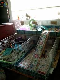 addition to the midwest habitat cage guinea piggles