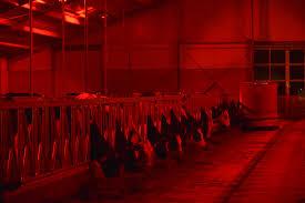barn lighting energy saving light for cows lely