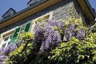 kletterpflanzen fã r balkon fassadenbegrünung mit kletterpflanzen tipps