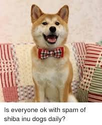 Shiba Inus Meme - 令v令t is everyone ok with spam of shiba inu dogs daily dogs meme