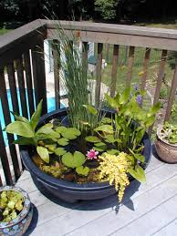 mini pond in a pot i love this backyard bliss pinterest