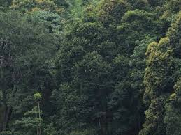 number of trees halved to 3 trillion in the world the hindu