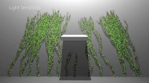interactive modeling and authoring of climbing plants youtube