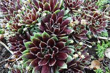 stauden pflanzen ebay