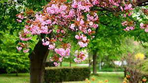 spring wallpapers hd download free 1920x1080 739 17 kb