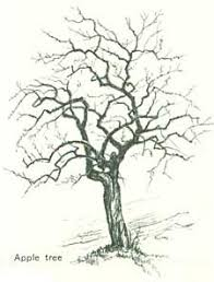 how to draw trees continued