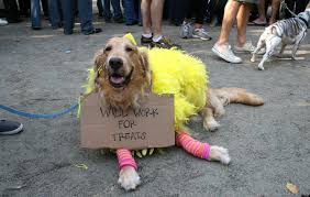 pictures of golden retrievers in halloween costumes u2013 merry dog