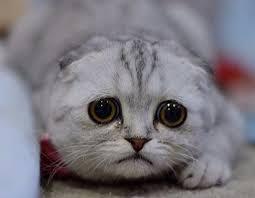 Sad Cat Meme - sad kitty blank template imgflip