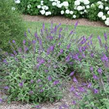 Small Shrubs For Front Yard - ten dwarf shrubs that will change the way you garden
