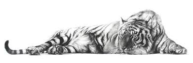 bengal tiger drawings pencil drawings bengal tiger