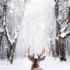 68 best winter images on winter snow