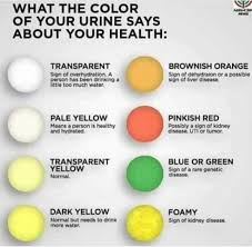What Is The Color Of 2017 by What Does The Colour Of Your Urine Say About You Jeanadalene