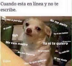 Memes De Chihuahua - ah los memes cada vez se ponen más buenos sin duda el internet