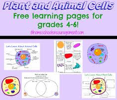 free cell coloring page animal u0026 plant cell color and label