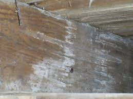 types of dangerous mold in your home quality aire fascinating