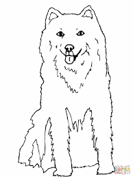 husky coloring pages newcoloring123