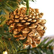13 reasons to rush outside and collect an armful of pine cones